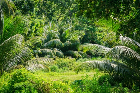 scenic background: Jungle forest scenic background. Big trees and green plants landscape in Seychelles.