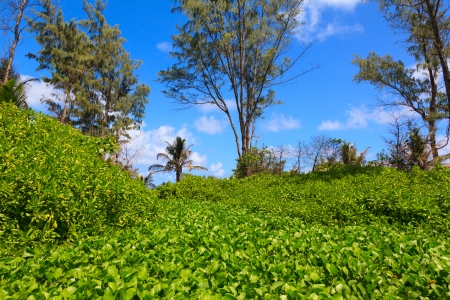 scenic background: Jungle forest scenic background and beach. Big trees and green plants landscape in Seychelles.