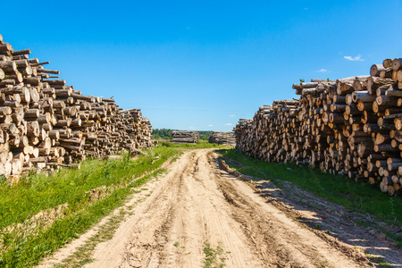 felled: Felled tree trunks piled on either side of agricultural road on the field