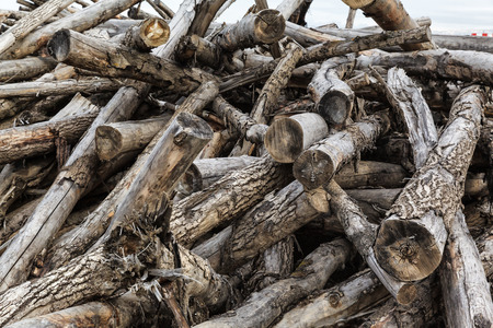 disorderly: disorderly piled old firewood in the forest Stock Photo