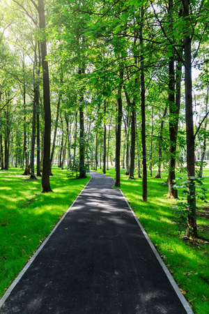 The new park of Moscow, fresh paths and the suns rays through the crowns of trees. Vnukovo.