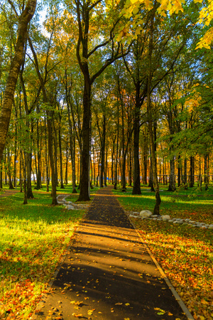 Autumn and yellow maple leaves in The new park of Moscow, fresh paths and the suns rays through the crowns of trees. Vnukovo. 写真素材 - 119298412
