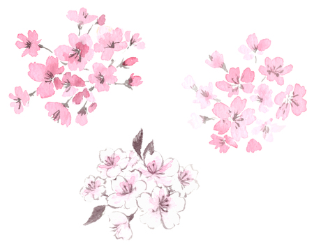 Cherry blossom illustration set Stock Illustratie