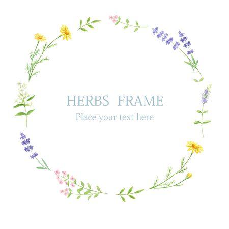 Cadre Herb Circle peint à l'aquarelle Vecteurs