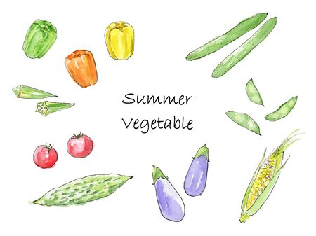 Hand-painted watercolor illustration set of summer vegetables