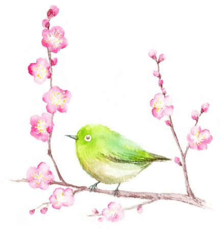 Watercolor illustration of Plum and Japanese bush warbler.