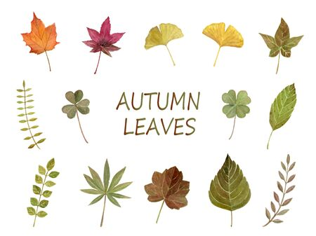 Autumn Leaf Watercolor Illustration Set Illustration