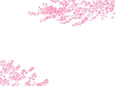 Background illustration of watercolor cherry blossoms 写真素材