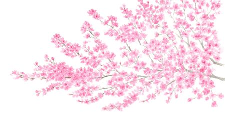 Watercolor illustration of cherry blossoms Stock Photo