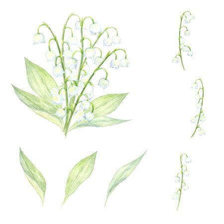 Watercolor illustration set of the lily of the valley