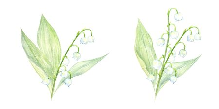 Watercolor illustration of the lily of the valley