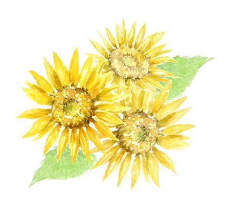 watercolor illustration of sunflowers 向量圖像