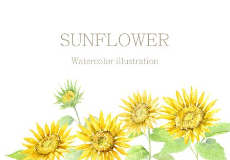 Watercolor illustration of sunflowers