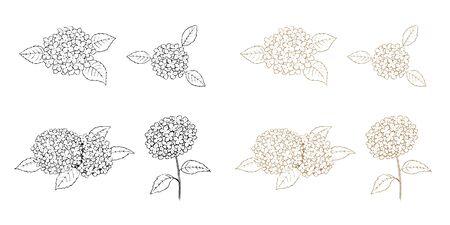 Hydrangea Line Art