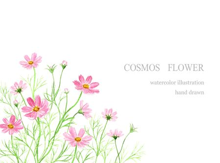 illustration watercolor of cosmos flower decoration.