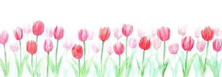 Watercolor illustrations of tulip fields