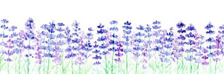 Watercolor illustrations of lavender fields