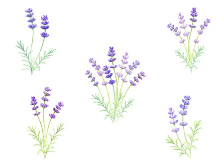 Lavender set drawn in watercolor  イラスト・ベクター素材
