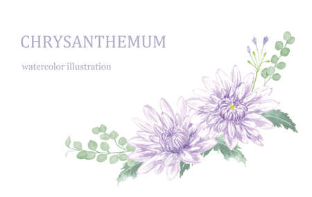 Illustration of chrysanthemums painted with watercolors