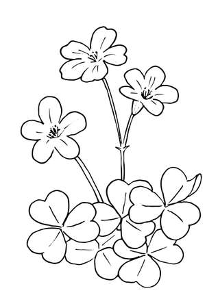 Katabami's Line Art 向量圖像
