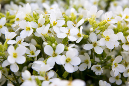 Pretty White Flowers Blooming in a Garden Imagens