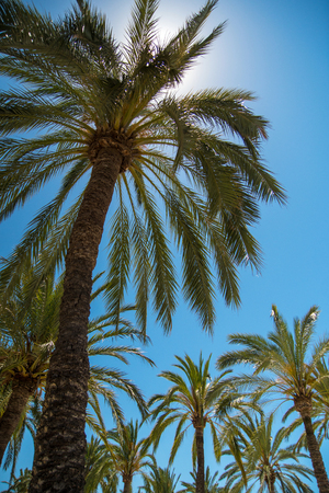 Palm trees at tropical coast Imagens