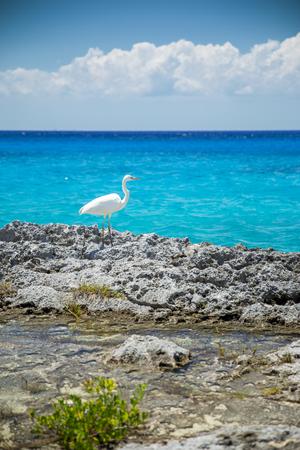 cozumel: Heron near the sea in Cozumel, Mexico Stock Photo