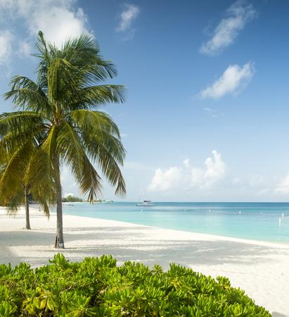 caribbean island: Paradise beach on a tropical caribbean island
