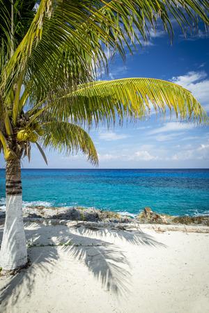 cozumel: Coast of Cozumel island, Mexico Stock Photo