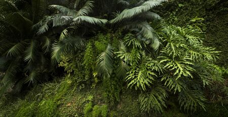 Lush vegetation in a tropical forest Фото со стока