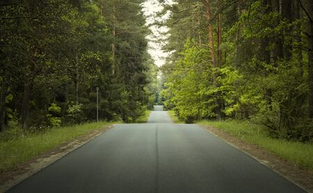 Straight, wavy road through a forest