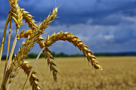 Beautiful rural landscape during harvesting. Stok Fotoğraf