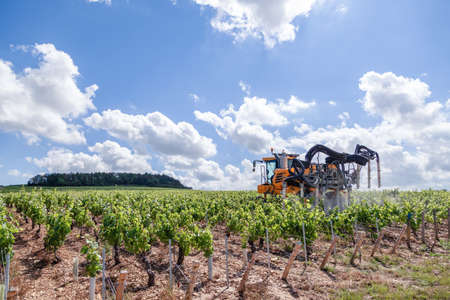 France Chablis 2019-06-21 Orange tractor cultivate field, tractor spraying vineyard with fungicide, sprayer machine, trailed by tractor, sprinkles pesticides among rows of vineyards