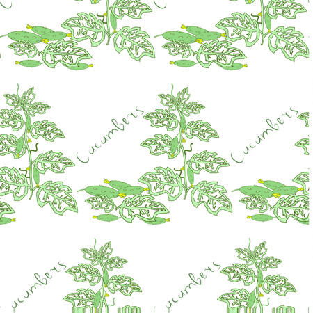 gherkin: Seamless floral pattern with cucumber bushes. Vector illustration.