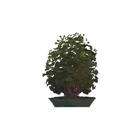 bonsai: Miniature tree in a pot. Indoor bonsai.