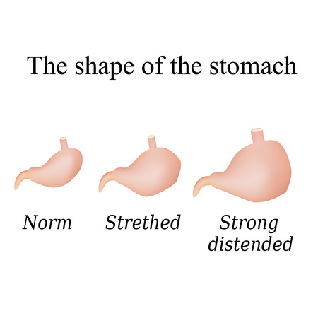 alimentary: Different forms of the stomach. Vector illustration on isolated background.