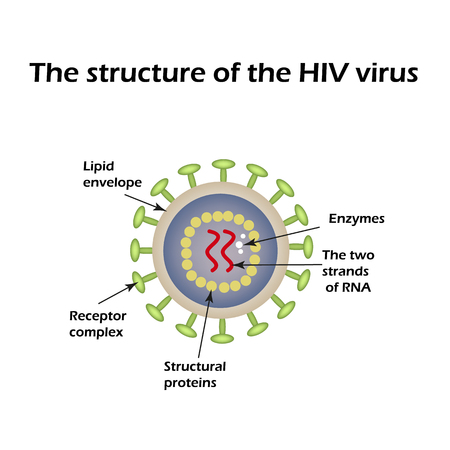 aids virus: The structure of the AIDS virus. HIV. World AIDS Day. Vector illustration.