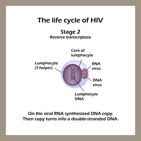replication: The life cycle of HIV. Stage 2 -The viral RNA synthesized DNA copy. World AIDS Day. Vector illustration. Illustration