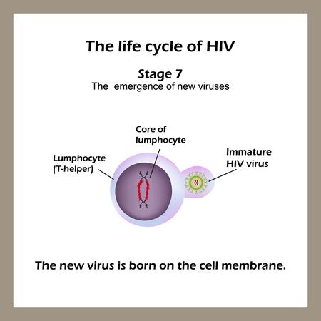 membrana cellulare: Il ciclo di vita del virus HIV. Fase 7 - Il nuovo virus nasce sulla membrana cellulare. La giornata Mondiale DELL'AIDS. Illustrazione vettoriale