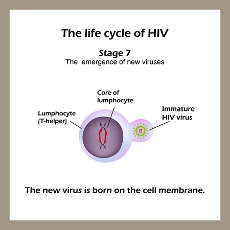 The life cycle of HIV. Stage 7 - The new virus is born on the cell membrane. World AIDS Day. Vector illustration