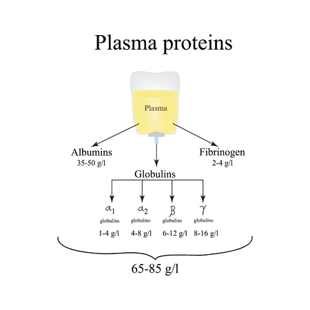 albumin: Plasma proteins. Albumin. Fibrinogen. Globulin. Infographics. Vector illustration. Illustration
