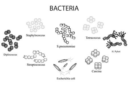 Set of bacteria. Black and white. Staphylococcus, Streptococcus, Streptococcus pneumoniae, Escherichia, coli, Helicobacter pylori, sartsiny, Diplococci, Tetrakokki. Hand draw. Vector illustration