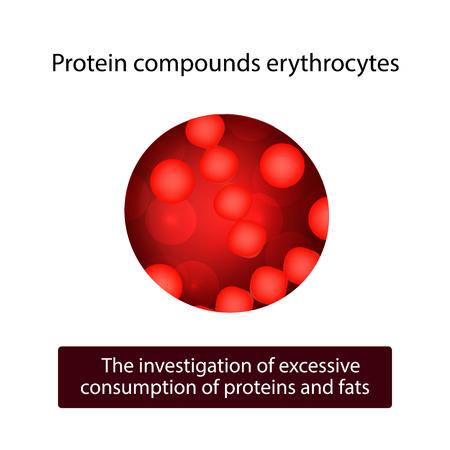 erythrocytes: Protein compounds erythrocytes. Vector illustration on isolated background. Illustration