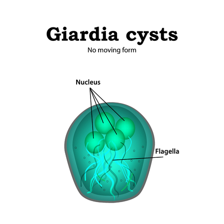 The structure of Giardia cysts. illustration on isolated background.