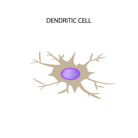 t cell: Dendritic cell immunity. Infographics. Vector illustration on isolated background.