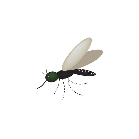 Mosquito on the isolated background. Vector illustration.