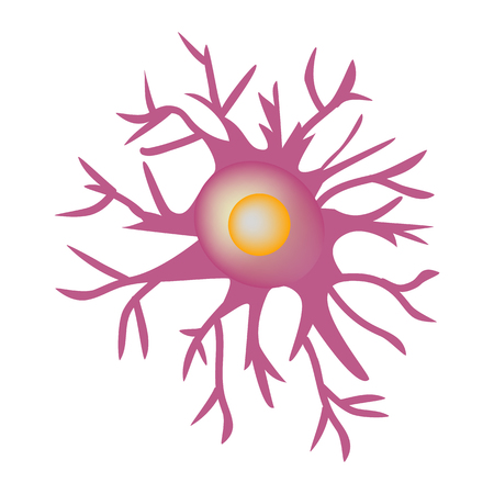cns: Astrocyte structure. Nerve cell. Infographics. Vector illustration on isolated background