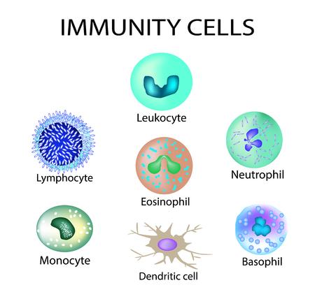 Celle di immunità. Impostato. Leucocita, linfociti, eosinofili, neutrofili, monociti, cellule basofili dendritiche Illustrazione vettoriale su sfondo isolato