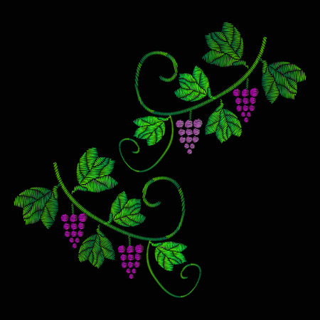 A vine with bunches of grapes. Embroidery of jeans. Embroidery is smooth. illustration on a black