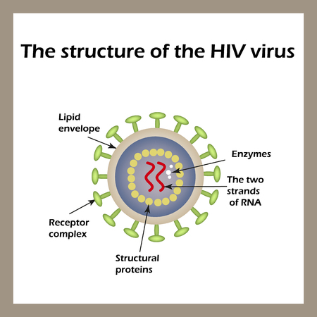The structure of the AIDS virus. HIV. World AIDS Day. Vector illustration.